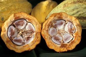 320px-Cacao-pod-k4636-14