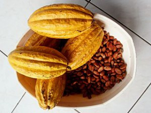 320px-Theobroma_cacao_(Cacao_2)