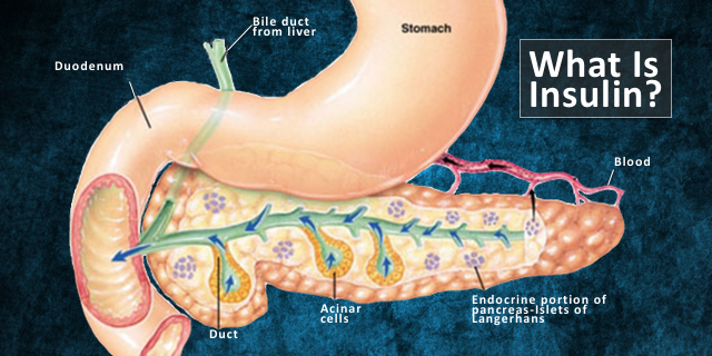 What is Insulin? Appreciating The Remarkable Pancreas