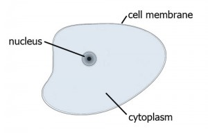 cell_diagram1