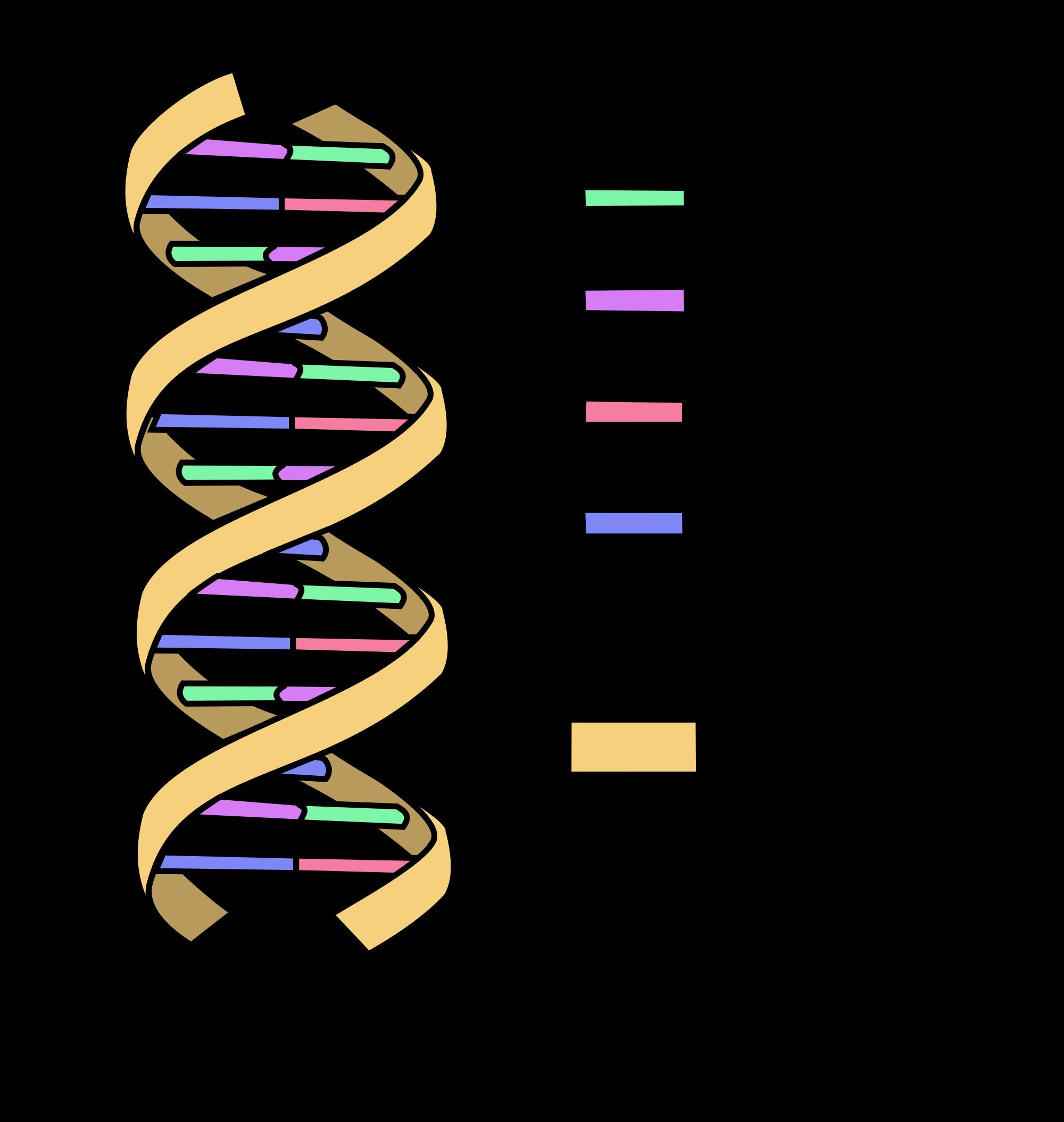oncology basics 2016 dna medivizor : dna diagram labeled - findchart.co