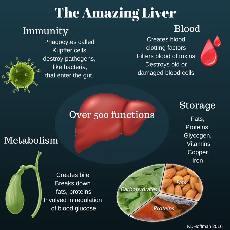 5 Facts You Probably Didnt Know About Your Liver