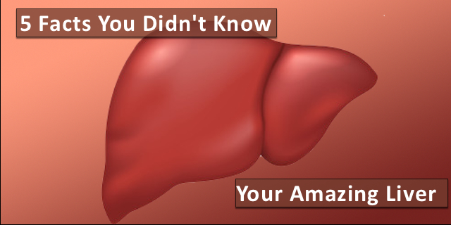 5 Facts You Probably Didn't Know About Your Liver