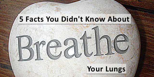 5 Facts You Probably Didn't Know About Your Lungs