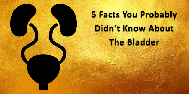 5 Facts You Probably Didn't Know About An Unappreciated Organ:  The Bladder