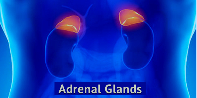 5 Things You Probably Didn't Know About Your Adrenal Glands