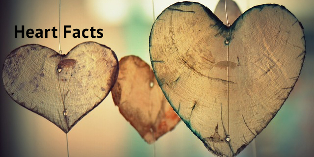 Heart Facts Infographic