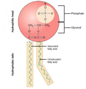 nanodrugs