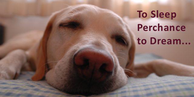 Why Do We Sleep?  Sleeping and Sleep Awareness Week