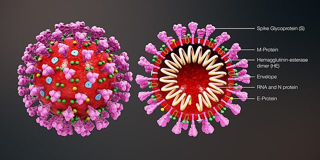 The Amazing Things We Know About Coronavirus (SARS-COV-2)