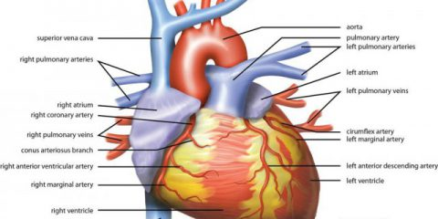 What's the Right Treatment for Coronary Artery Blockages?
