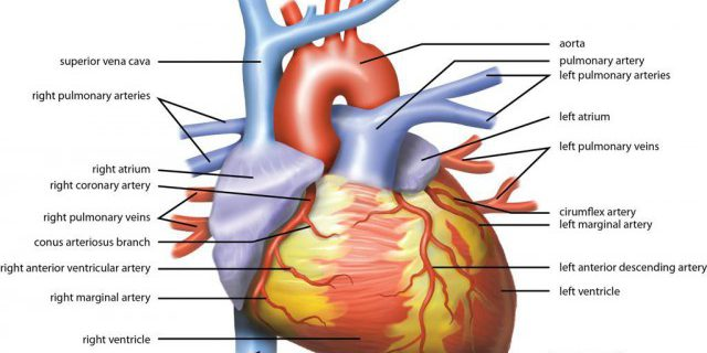 Whats The Right Treatment For Coronary Artery Blockages Medivizor