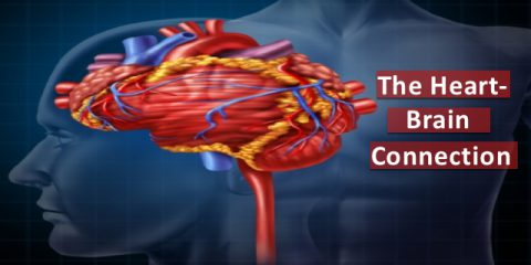 The Heart-Brain Connection:  New Findings on Stress and Heart Attack